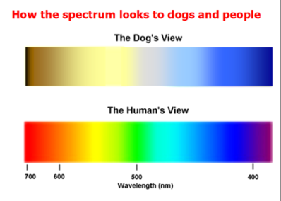 dog_color_vision